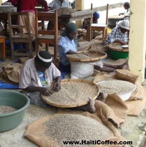 Photo courtesy of Haiti Coffee