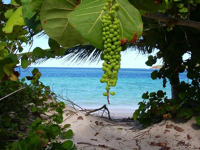 Flamenco Beach - Photo Credit: bluecolt, Creative Commons